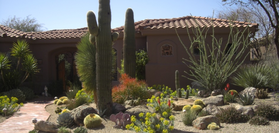 Our range of service area also makes us Glendale, Peoria and Scottsdale landscapers too.