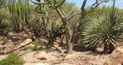 We may use desert-tough plants in Scottsdale and Phoenix, Arizona landscape design, but your season of blooming is so much longer here.
