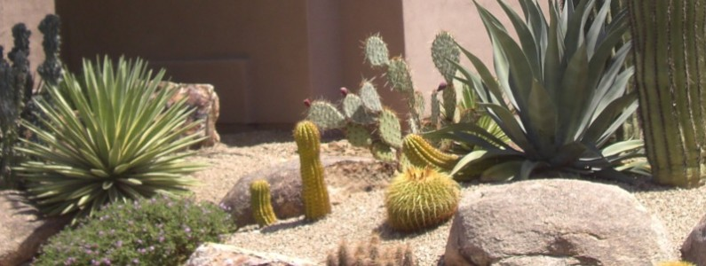 Arizona Desert Landscaping