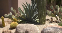 There's certainly nothing boring about great Scottsdale, Arizona desert landscaping design.