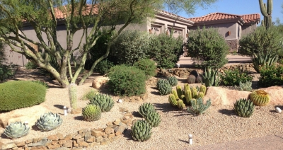 Courtyard garden, patio framing, or front yard plantings; xeriscaping with Phoenix desert plants can be so beautiful.
