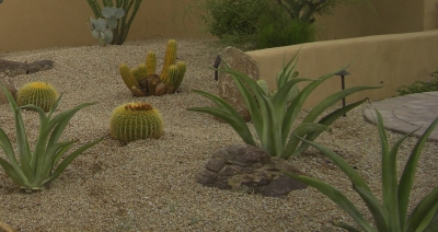 Great Phoenix, Arizona landscaping blends with the desert, working with a selection of xeriscaping plants.