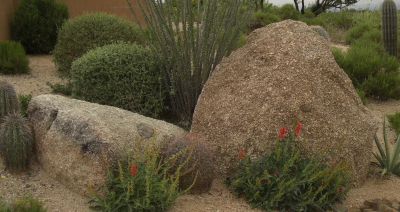 Using large rocks in planting areas brings out the intricate beauty of of the blooms and greenery of plants used in Paradise Valley landscaping.