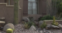One of the big benefits of Peoria landscaping is the low maintenance and water needs of Arizona xeriscaping plants.