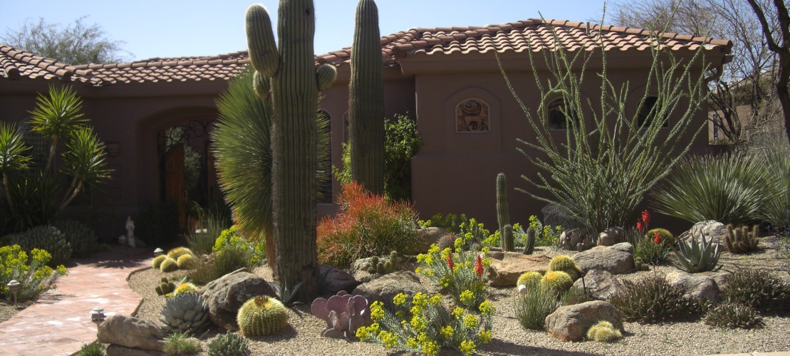 Beautiful Xeriscaping