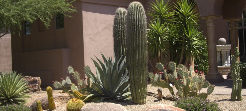 Colorful Arizona Xeriscaping Landscaping Design Desert