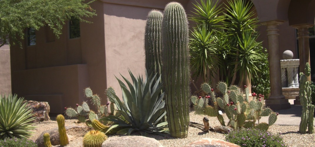 Colorful Xeriscaping