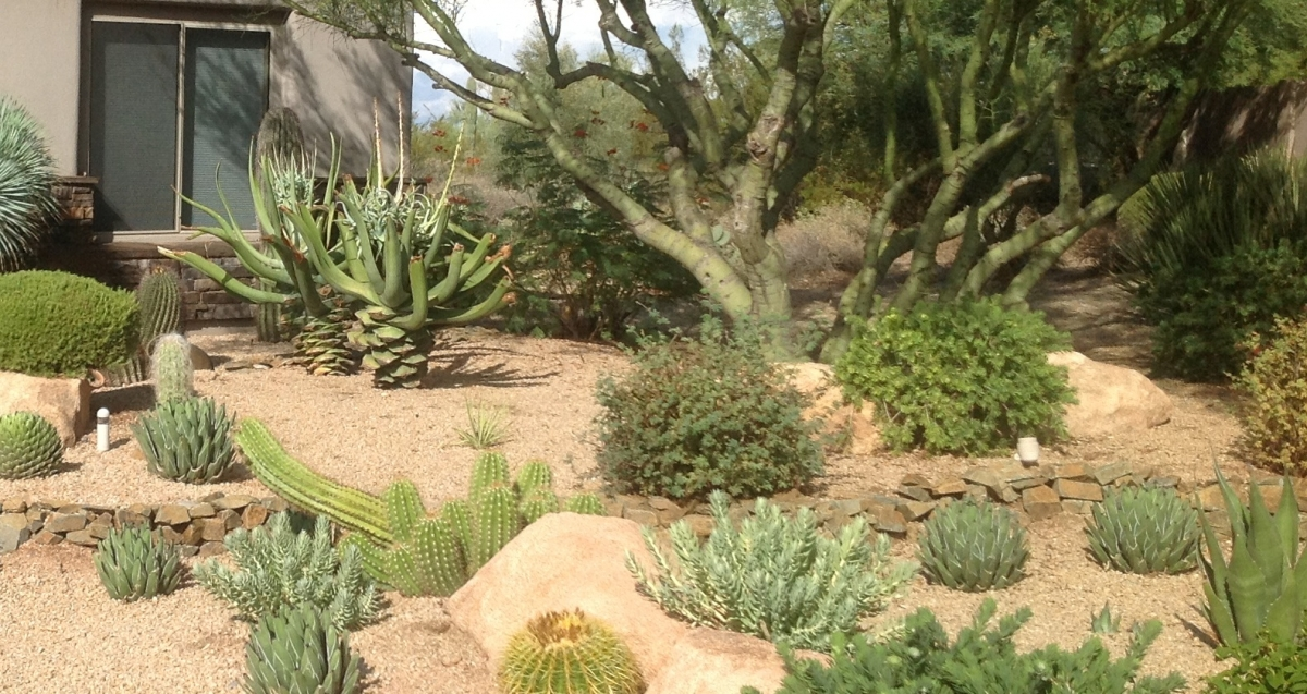 Getting rid of the myths. Things you should know about xeriscaping Phoenix and Scottsdale homeowners.