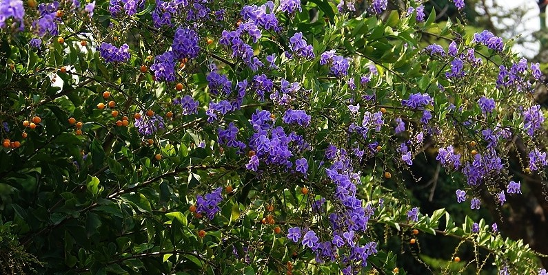 Top 6 Blue Flowering Plants