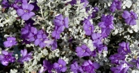 Fall Blooming Phoenix Landscaping Plants