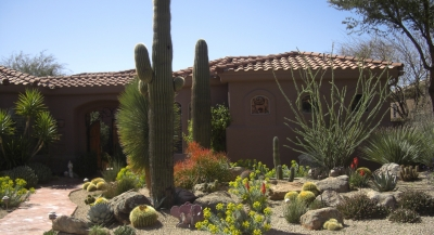 Prefer more color than texture in your Scottsdale or Phoenix landscaping? You can have that with the right plant selection and arrangement.