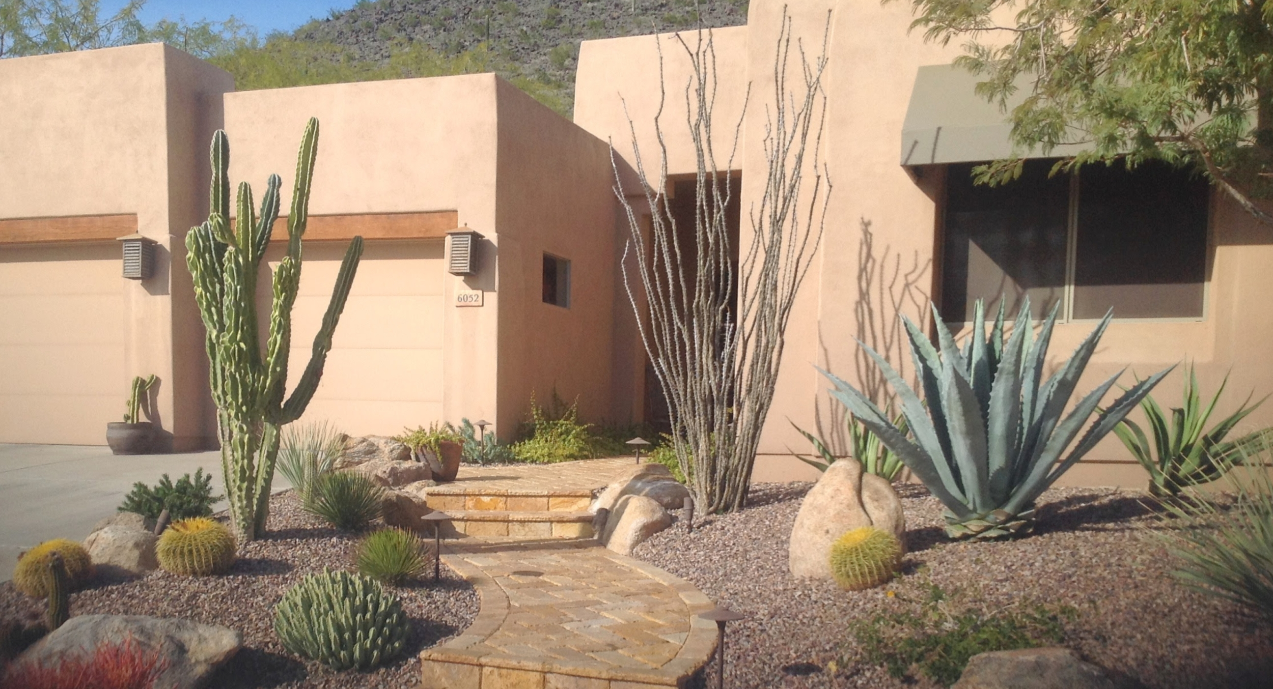 Softscaping covers all the plants used for landscaping in Phoenix & Scottsdale; usually a mix of trees, shrubs, cacti, succulents, and perennials.