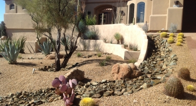Lots of color from minimal plants in this modern desert landscaping Phoenix clients had us create. Purple, yellow, and blue-green mix without a single flower in sight.
