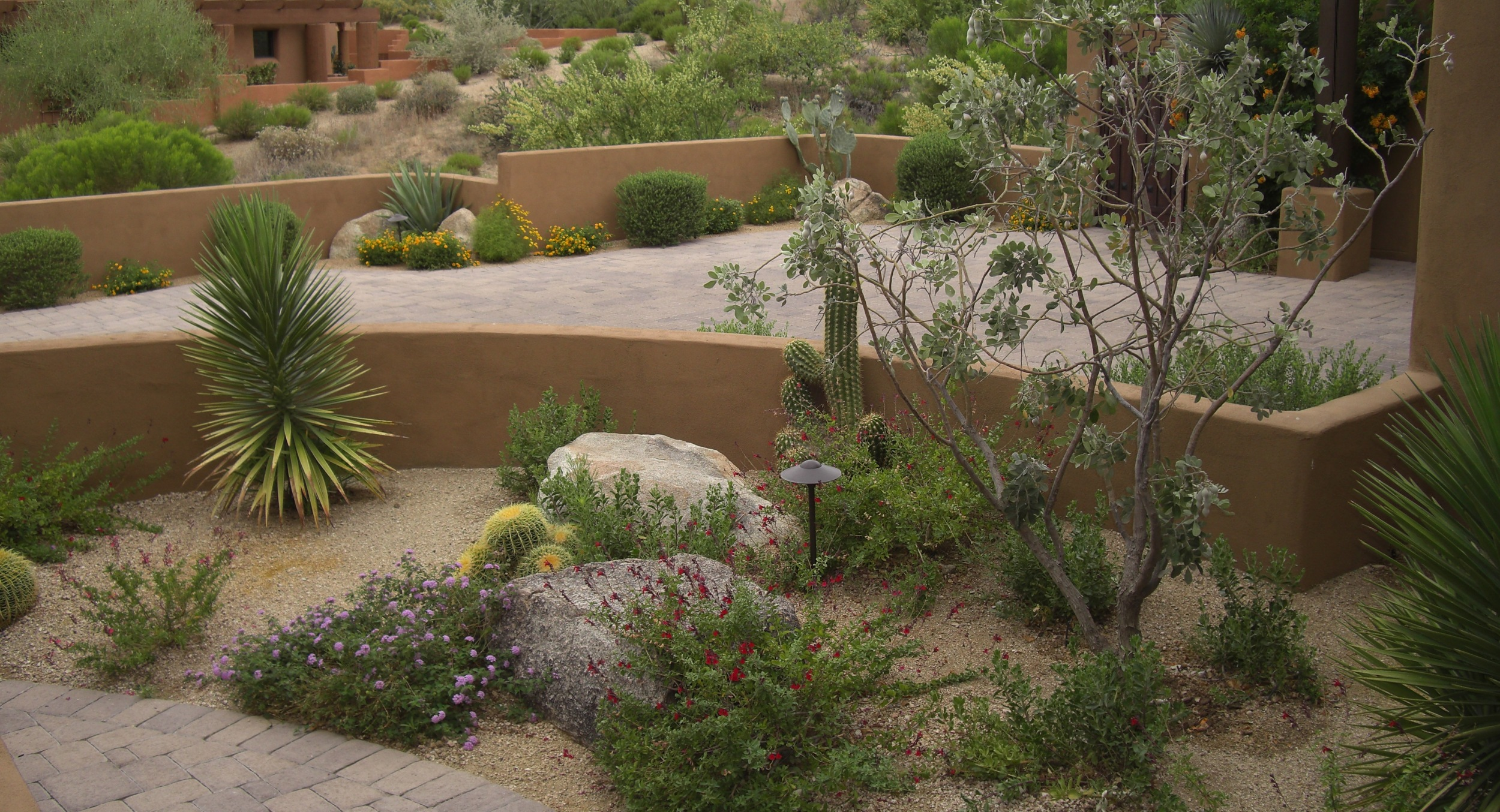 Desert tough plants arranged like a garden. Patio designs like this one immerse you in earthly delights that thrive here offer you low-maintenance Glendale, AZ landscaping that changes with the seasons.