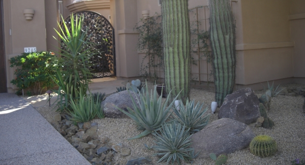 You don't need lots of species to create truly beautiful landscaping, Phoenix. This front walk planting looks awesome combining only a couple types of cacti, several aloe varieties, a small palm, and Lady Banks roses.
