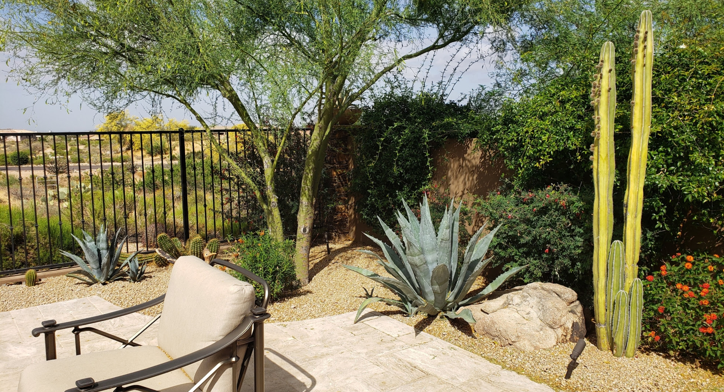 Desert plants are tough, but in your Scottsdale or Phoenix landscaping, watering enough to keep them in prime health make your yard look better and your plants easier to care for.