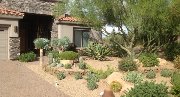 A great example of desert-tough, yet beautiful landscaping, Scottsdale. Xeriscaping paired with drip irrigation gives plants better performance power.